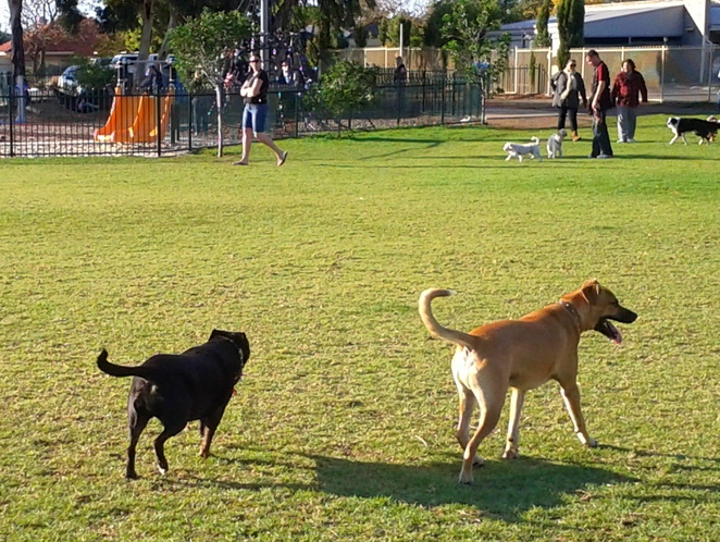 dog, dogs, off leash, dog friendly, exercise, reserve, dog park, hazelmere reserve, dog registration
