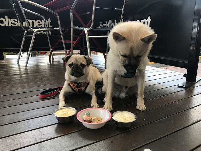 dog friendly cafe, brisbane, puppiccinos, dog menu, dog treats, cafe, restaurant, food, drink, frenchies, woofissimo, mt cup espresso, that little place, the coffee nook, our place coffee garden, atticus finch cafe, sweet crumbs patisserie, beanbag espresso, lucky cat cafe, bellissimo coffee bulimba, rspca black cat cafe, the cup cake taste and espresso bar, arthurs green, black lab coffee