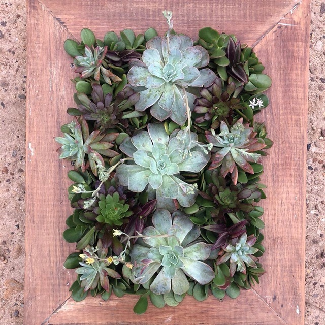 For,the,Love,of,Succulents