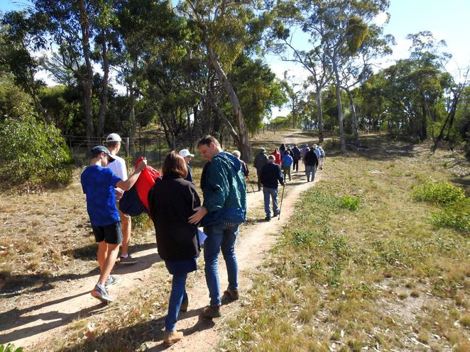 guided walks in belair national park, belair national park, guided walks, friends of belair national park, native orchids, orchids, rsl walk, national park, free guided walks