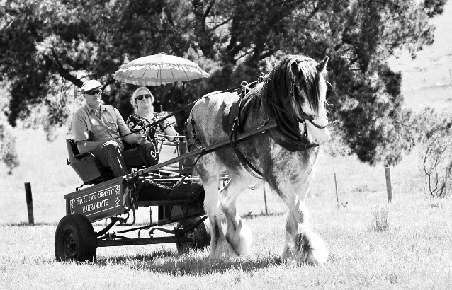 Have a ride in the horse drawn caravan