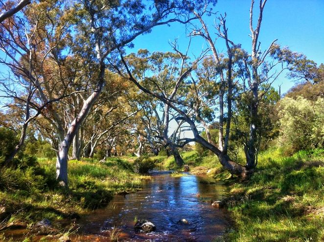 National Trust, parks, reserves, south australia, Adelaide Hills, Adelaide, hills, trail, wildflowers, saunders creek