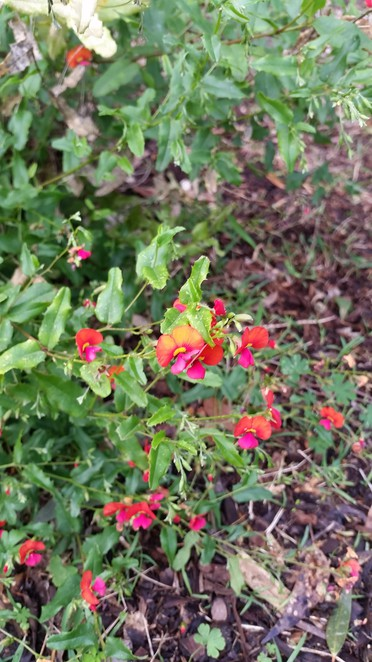 Native plants can produce colour in the garden most of the year.