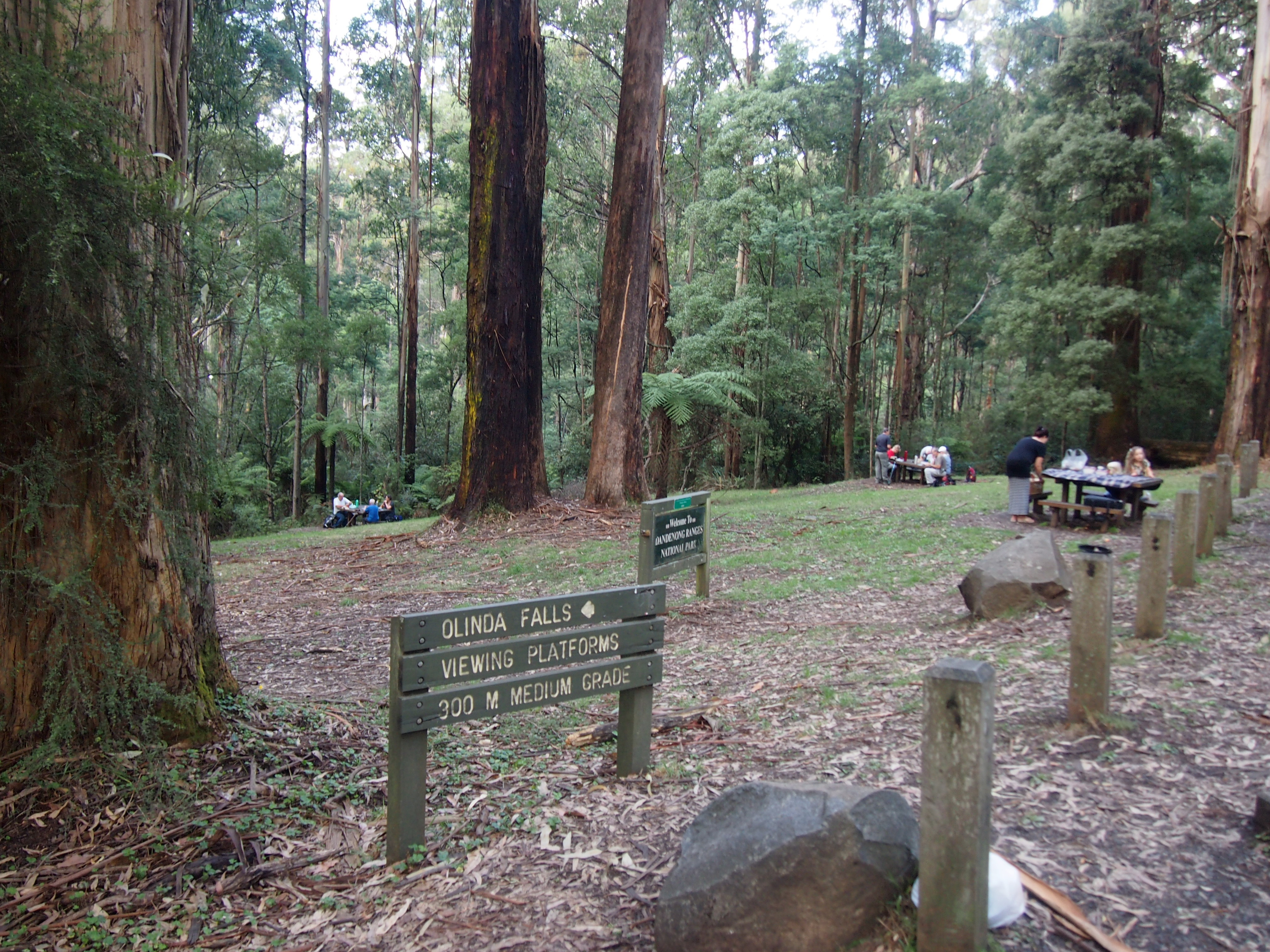 Top Things To Do In The Dandenong Ranges Melbourne