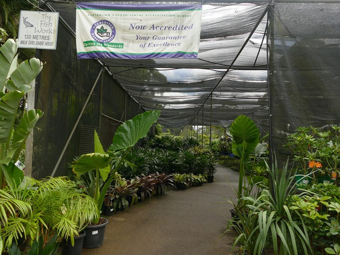 Palm Land Nursery Belrose NSW