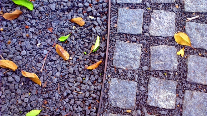 patterns and paths, photoh, smartphone photography, photography short course, adelaide botanic gardens, adelaide in autumn