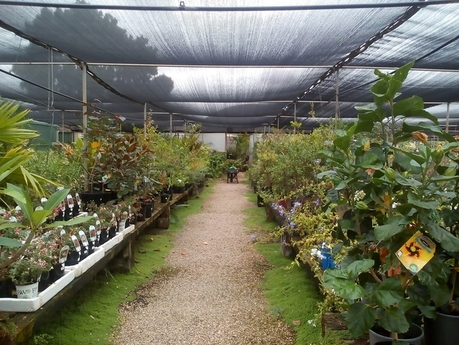 Peninsula Nursery and Pets, Kadina, pet shops, pet supplies, nursery, seedlings, trees, garden soils, garden ornaments