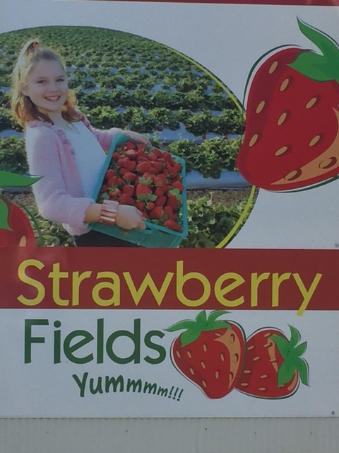 pick your own strawberries, pre-packed strawberries, fun in the sun, family outing, get back to nature