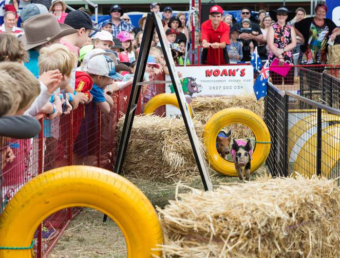 royal canberra show, actewAGL royalcanberra show, ACT, family friendly events,