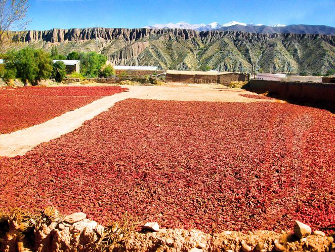 Salta province north west argentina cachi plateau cactus cacti chili fields paprika sun dried