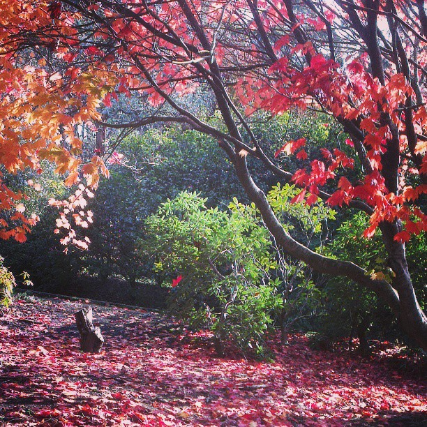 Places To Visit In Melbourne In August: Top Things To Do In Autumn In Melbourne