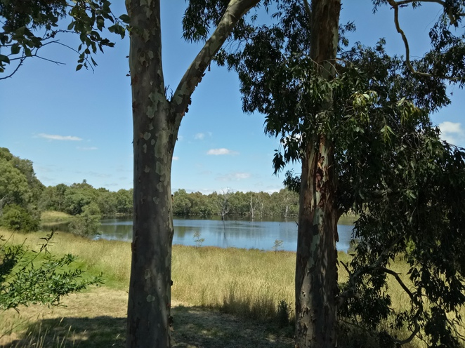banyule flats reserve, bike ride, main yarra trail, walking, paths, outdoors, exercise, banyule, heidelberg, bike trails, nature, water, bush