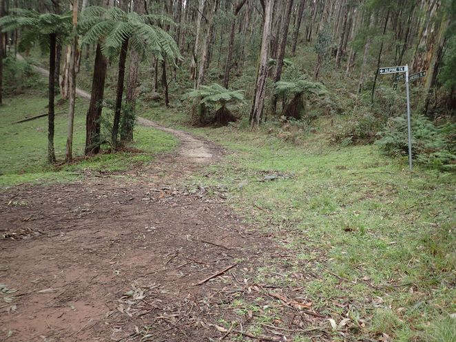 Dandenong Ranges, Ferntree Gully, bushwalk, Belgrave, Sherbrooke Forest, hiking, walking track
