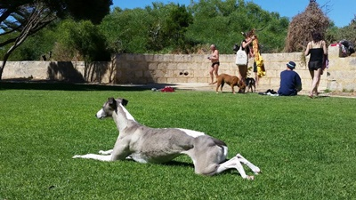 Dogs,relaxing