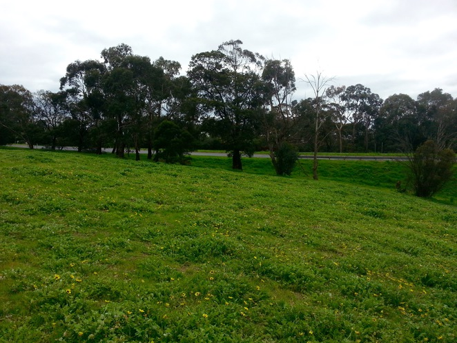 Edsall Reserve, Wallington, Bellarine Peninsula, Bellarine Highway