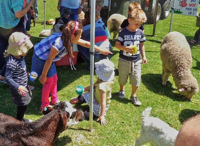 fair, primary school, in adelaide, south of adelaide, community, kids activities, children, entertainment, stalls, petting zoo