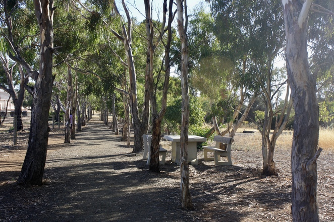 The Avenue of Gums at the Tumby Bay Silo Art – image Jenny Esots