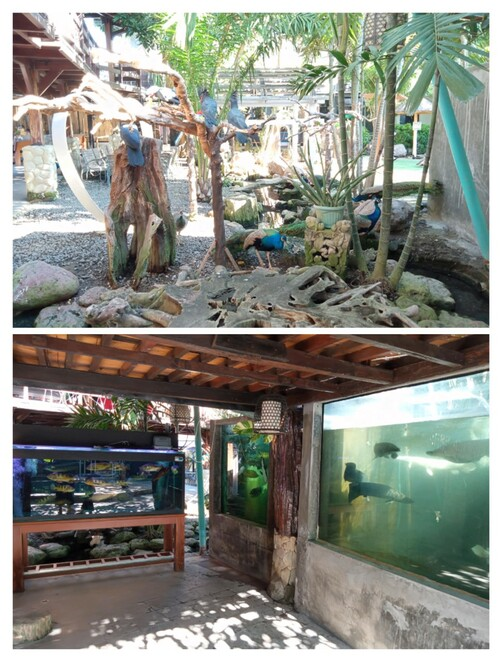 Kanda, Restaurant, Mini Zoo, Birds, Swimming, Family, Children, Kids, Sanur, Bali