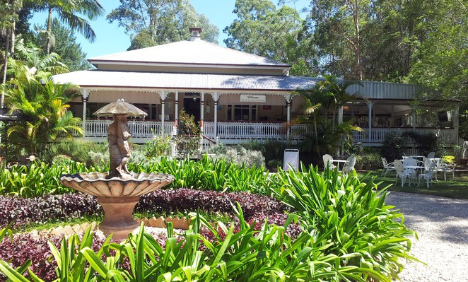 kate james, high tea, mudgeeraba, old teahouse gallery, cake, tea, springbrook,