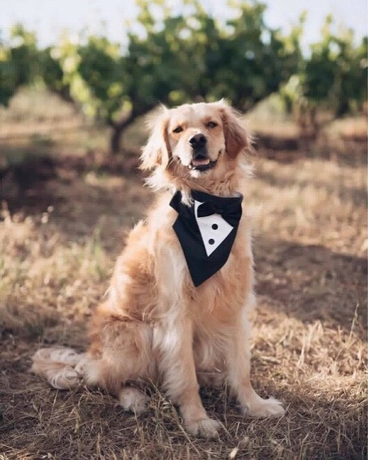 Little Animal Company pet dog wedding