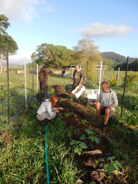 WWOOFers tending the gardens at New Govardhana.