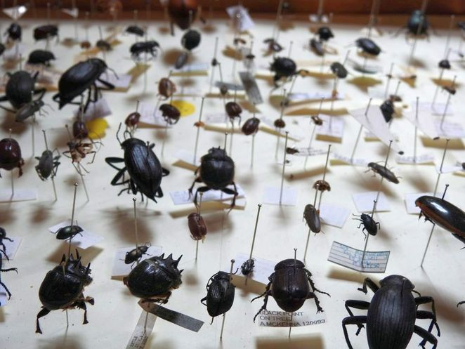open state, open state festival, adelaide, things to do, free, food, fun, festival, are you bug curious