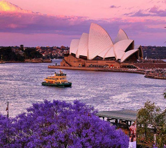 Sydney's beautiful harbour boasts amazing Jacaranda gardens