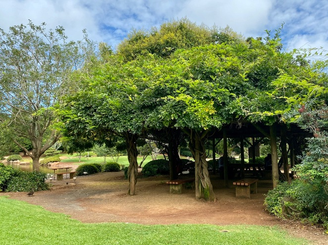 Beautiful vines and shaded picnic areas at the Japanese Gardens