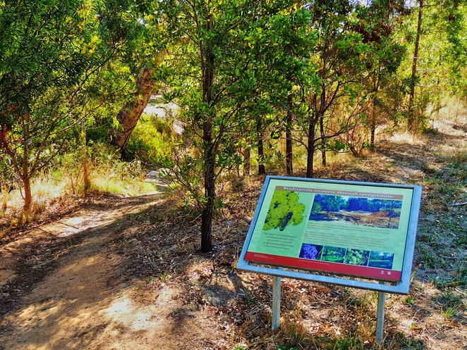 in adelaide, south of adelaide, parks in sa, adelaide hills, walking and hiking, off leash area, mountain biking, blackwood forest, recreation park