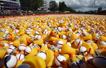 support the duck race, great brisbane duck race, cancer charity, qld cancer council