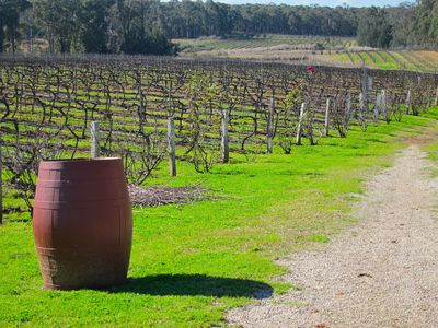 Tintilla Estate Wines and Olive Grove, Pokolbin, Hunter Valley