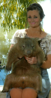 Tonka (the resident fat wombat)