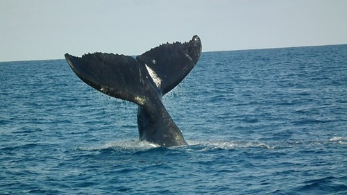 Abrolhos,islands,whale,watching