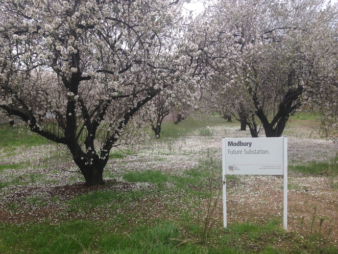 almond blossom milne road grove future sub station sa power networks