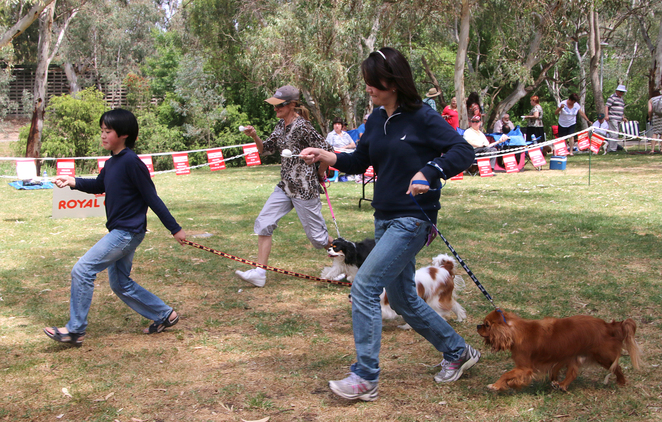 Cavalier King Charles Spaniel, Cavalier Capers, funday, egg and spoon, race