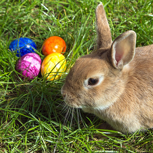 Easter, bunny, rabbit, eggs, Easter egg, grass, Sunday, weekend, hunt, activity, event, Coal Creek, park, museum