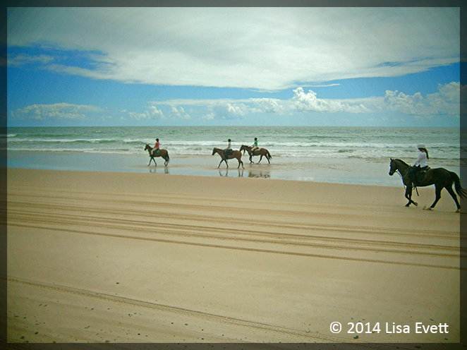 horse riding, sunshine coast, noosa, beach riding