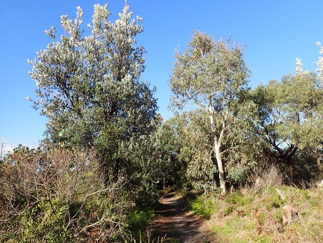 Kananook Creek, Seaford, Frankston, walking trail, creek, nature, bushwalk, walking track