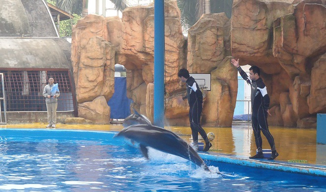 Nanning zoo, dolphins