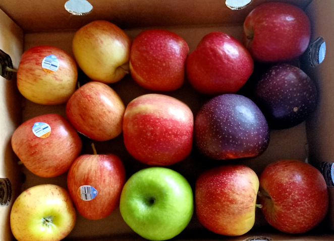 Enjoy a wide variety of apples from Nicoletti Orchards in Stanthorpe