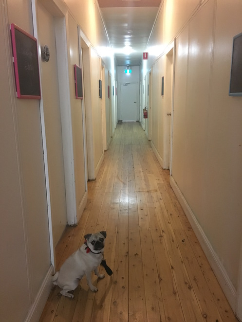 the rex, tamworth, brisbane, sydney, guesthouse, motel, hotel, country festival, guesthouse, dog friendly, jodys guesthouses, accommodation, cheap, friendly