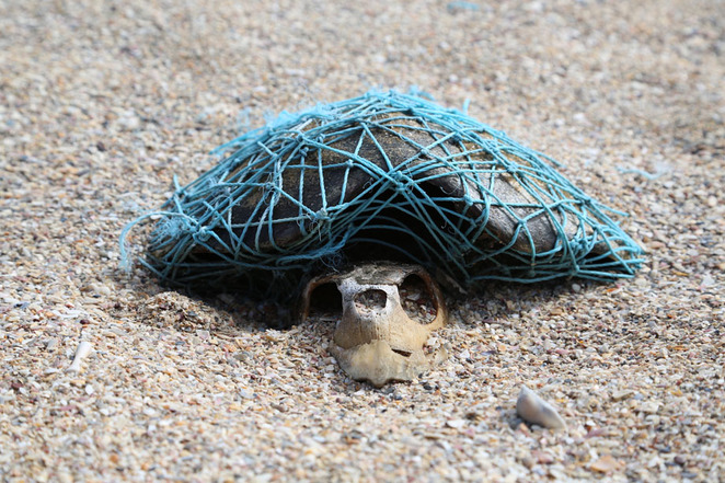 Turtle, nets, pollution, sandy beach, snorkel