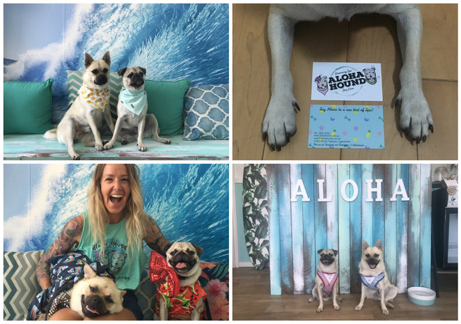 aloha hound, dog care, dog salon, grooming, southside, brisbane, southern suburbs, loganholme, doggy daycare, doggy spa, dog friendly, pet shop, doggie tea, rosie and co barkery, miss drews dog bakery, sweet chops, furry peach, hawaii, holiday