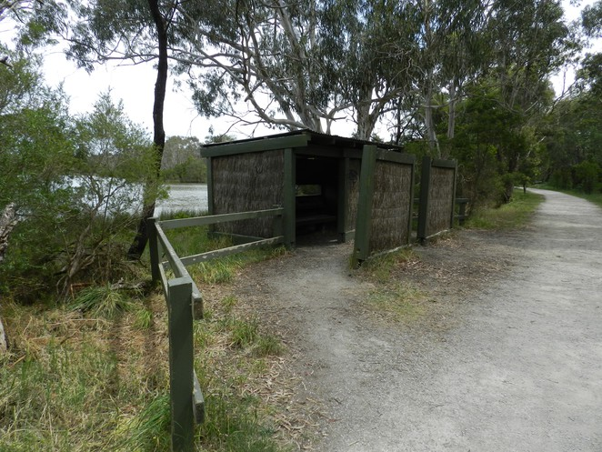 bird hide, jells park, parks in melbourne, birdwatching in melbourne, birding in melbourne, birdwatching,
