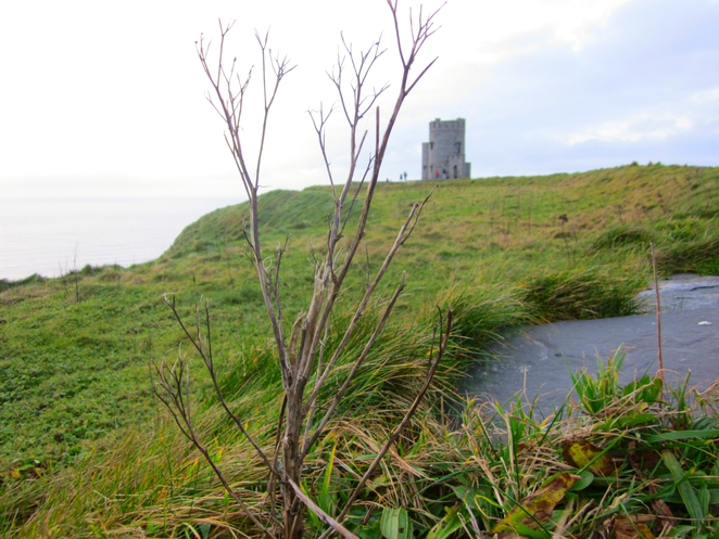 Cliffs of Moher, Ireland, cliffs, O'Brien's Tower