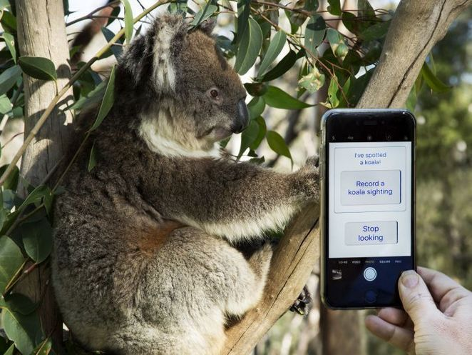 Discover Citizen Science, Discovery Circle, adelaide, free, Citizen Science, free, scientist, science, koala