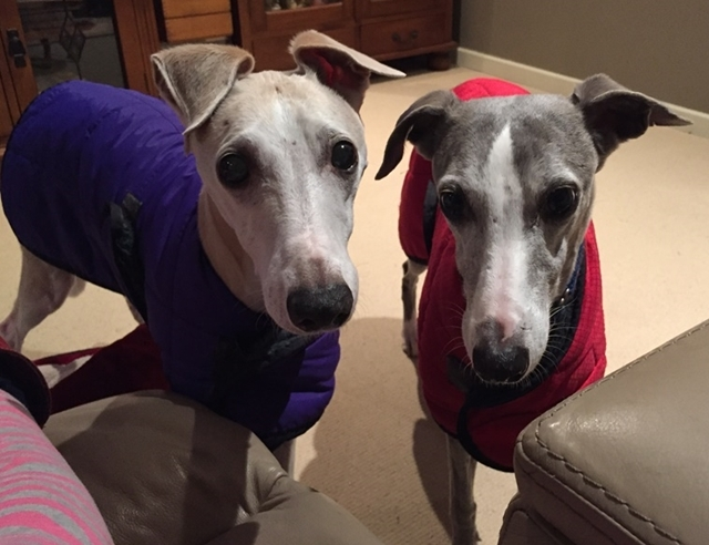 My,whippets