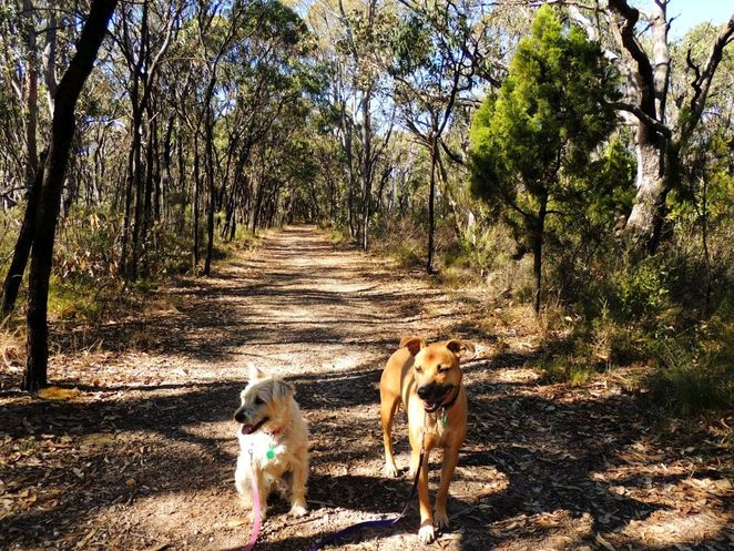 National Trust, parks, reserves, south australia, Adelaide Hills, Adelaide, hills, trail, wildflowers, dog friendly