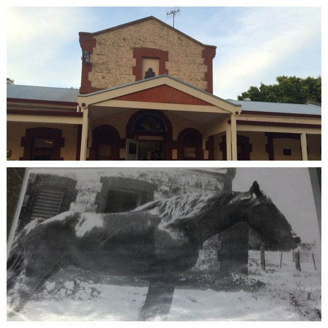 'Plodder' the ghost horse at the Goolwa RSL