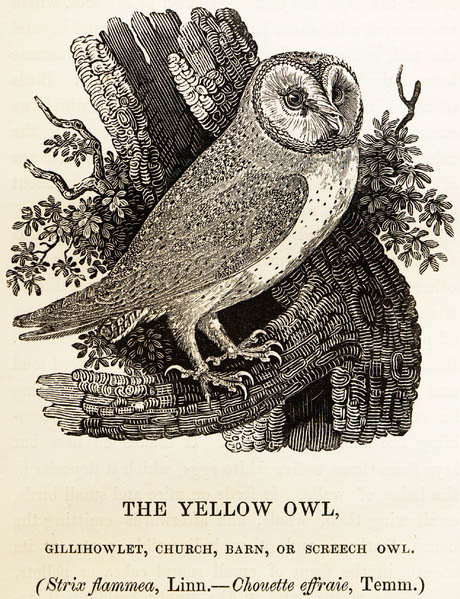 Thomas Bewick, wood engraving, Tooth and Nail, exhibition, owl